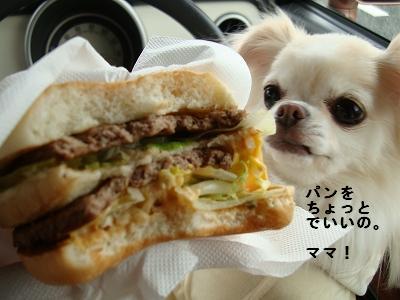 ピコネと堺カフェ (9)