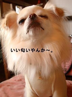 ピコネと堺カフェ (19)