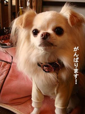 ピコネと堺カフェ (24)