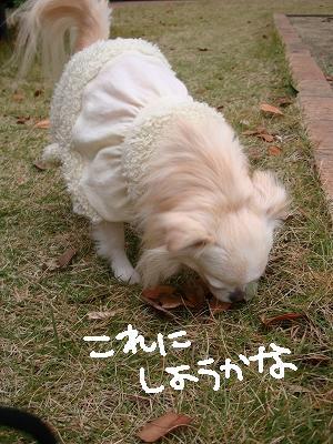 葉っぱ隊 (13)