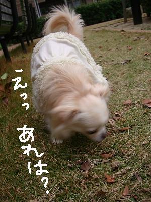 葉っぱ隊 (14)