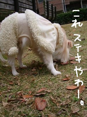 葉っぱ隊 (15)