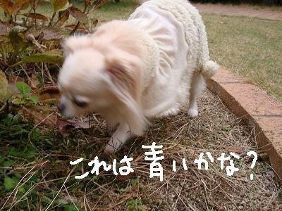 葉っぱ隊 (18)