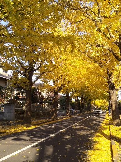 autumn denenchofu 3
