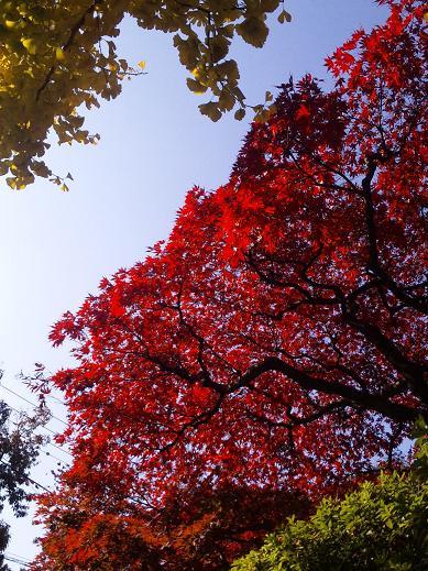 autumn denenchofu 4