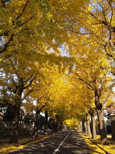 autumn denenchofu 2