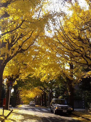 autumn denenchofu 1