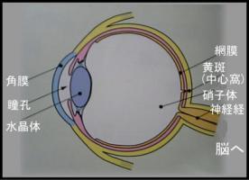 目の構造と働きについて