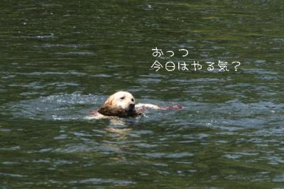 2009520川遊び