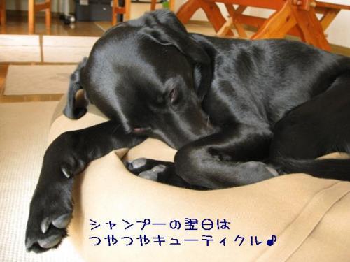 2009416kyu-thikuru