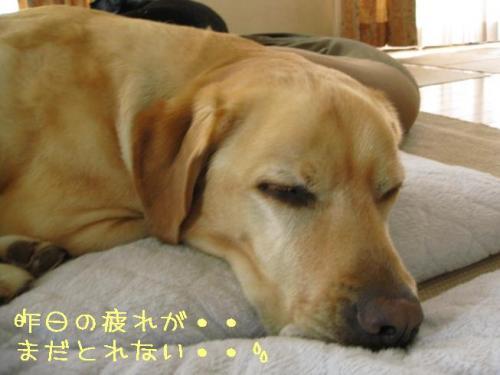 2009416otukaresama