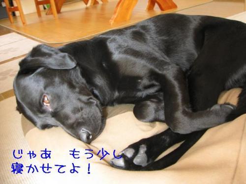 2009416nekaseteyo