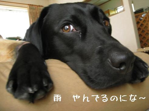 2009421oosouji