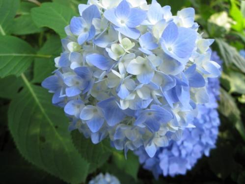 200967ajisaiao