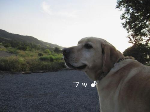 2009613ゆうやけ