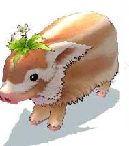 クローバー豚 といわれているいきもの