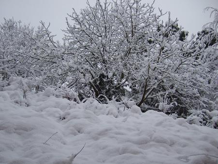 1月の雪2