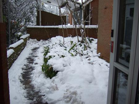 1月の雪4