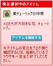 黄チューリップ球根②