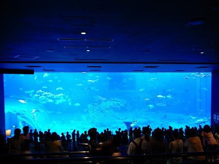 美ら海水族館14
