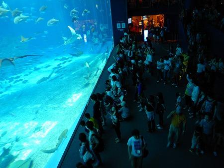 美ら海水族館18