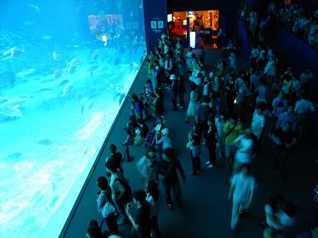 美ら海水族館20