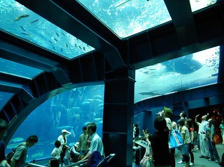 美ら海水族館22