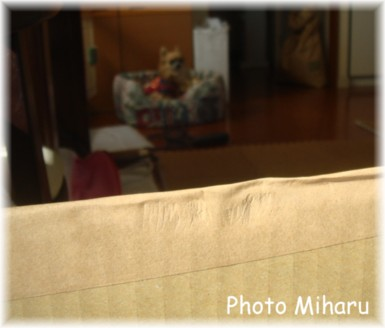 P02012008007-1.jpg