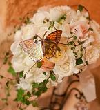 蝶々の奇跡2