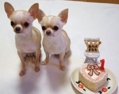 20061014_cake.jpg