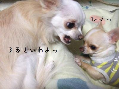 2006_1107_0006.jpg