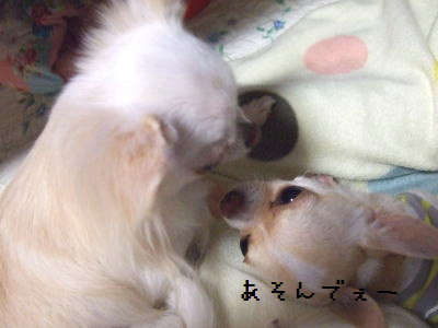 2006_1107_0012.jpg