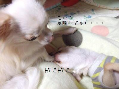 2006_1107_0015.jpg
