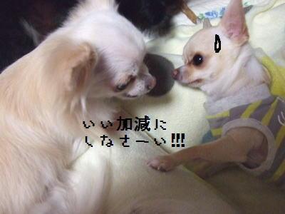 2006_1107_0018.jpg