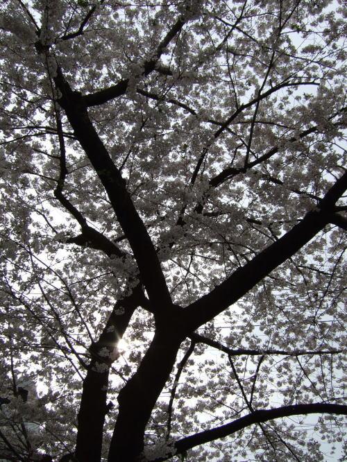 2007_0401_0056.jpg