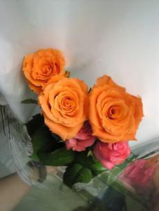 HABAのバラ