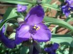 町で見かけた花シリーズ07104