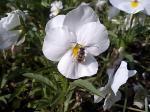 町で見かけた花シリーズ07114