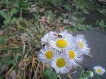 町で見かけた花シリーズ07116