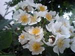 町で見かけた花シリーズ07127