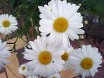 町で見かけた花シリーズ07128