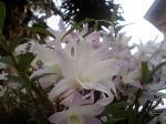 町で見かけた花シリーズ07146