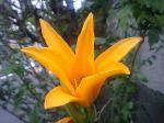 町で見かけた花シリーズ07148