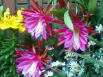 町で見かけた花シリーズ07153