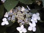 町で見かけた花シリーズ07157