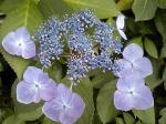 町で見かけた花シリーズ07161