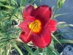 町で見かけた花シリーズ07166