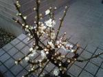 町で見かけた花シリーズ0716