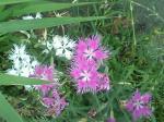 町で見かけた花シリーズ07180