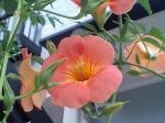 町で見かけた花シリーズ07185